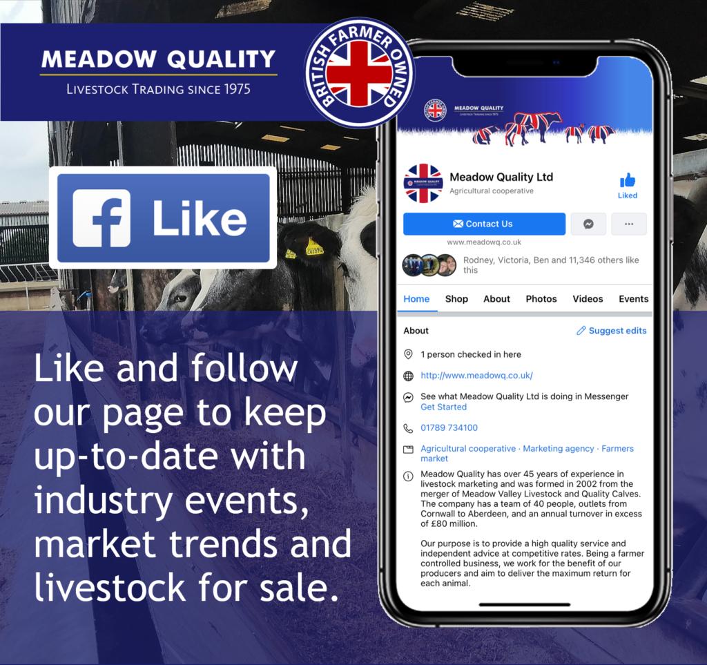 Meadow Quality FB