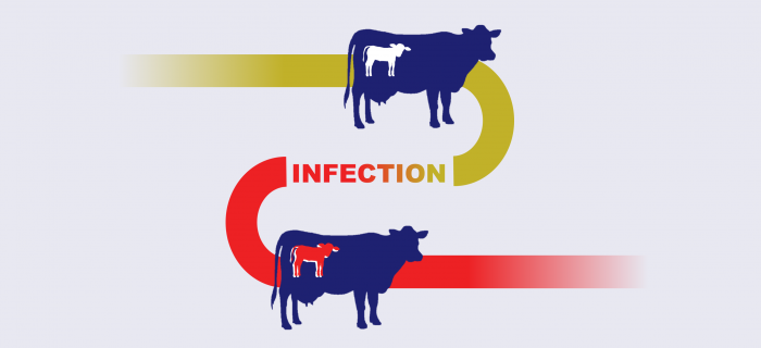 BVD_contraction infographic